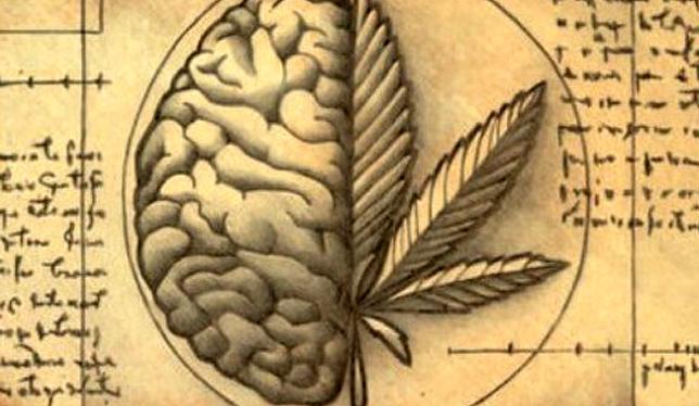 Alzheimer: como a cannabis pode auxiliar no tratamento