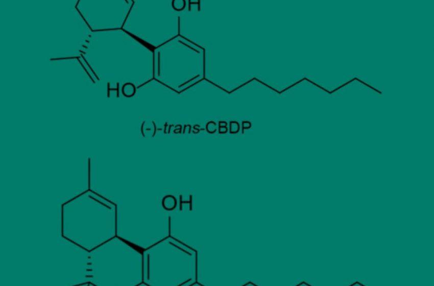 THCP e CBDP: Conheça os novos potentes canabinóides descobertos