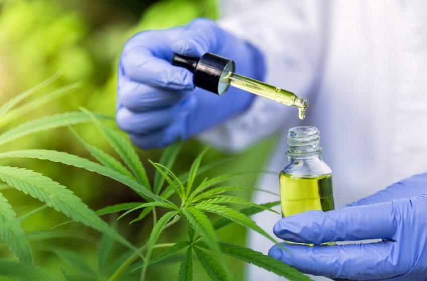 Cannabis medicinal: como pode ajudar no tratamento de doenças