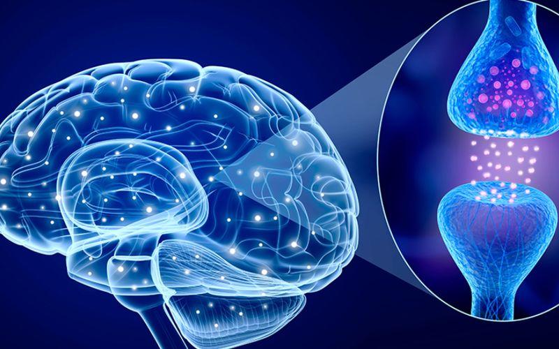 Como o CBD age no cérebro e no corpo?
