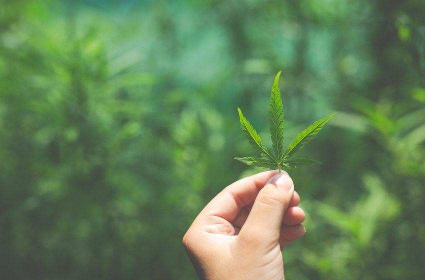 Conferência digital sobre Cannabis reúne empresas do mundo inteiro para discutir o futuro do mercado