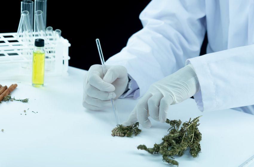 Diferença entre medicamento e produto de cannabis de acordo com a ANVISA