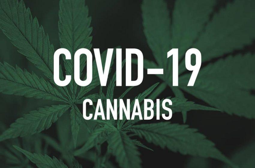 Pessoas com COVID-19 podem usar cannabis?