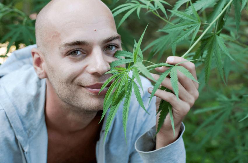 Cannabis medicinal no tratamento do câncer