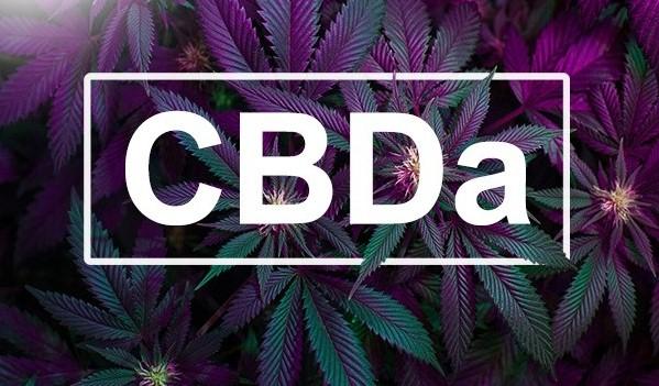 CBDa: O que é, seus efeitos e poder medicinal