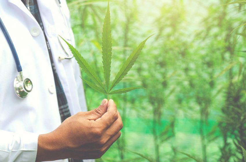 Por que poucos profissionais prescrevem cannabis?