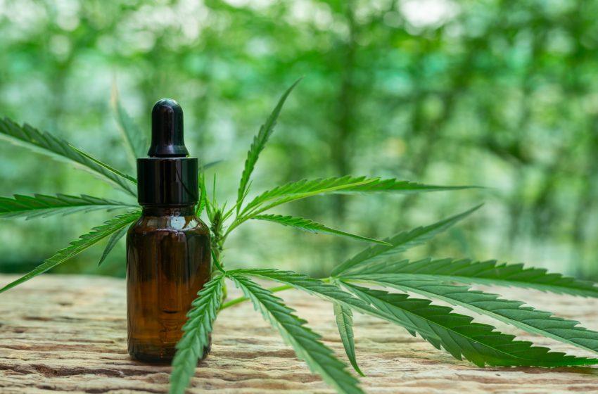 Os rumos da cannabis medicinal no Brasil este ano