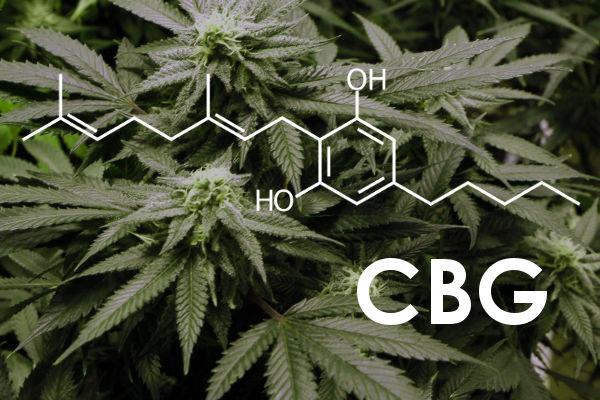 CBG: O que é, Benefícios e Efeitos