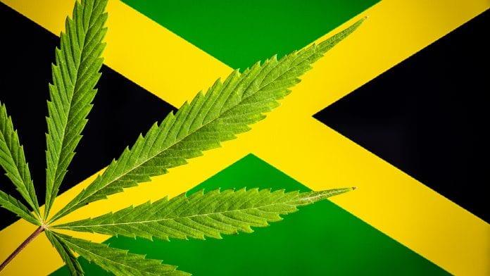 Exportações de cannabis na Jamaica: atrasos devido ao COVID-19
