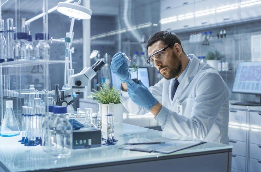 Cientistas criam método para armazenar pólen de cannabis