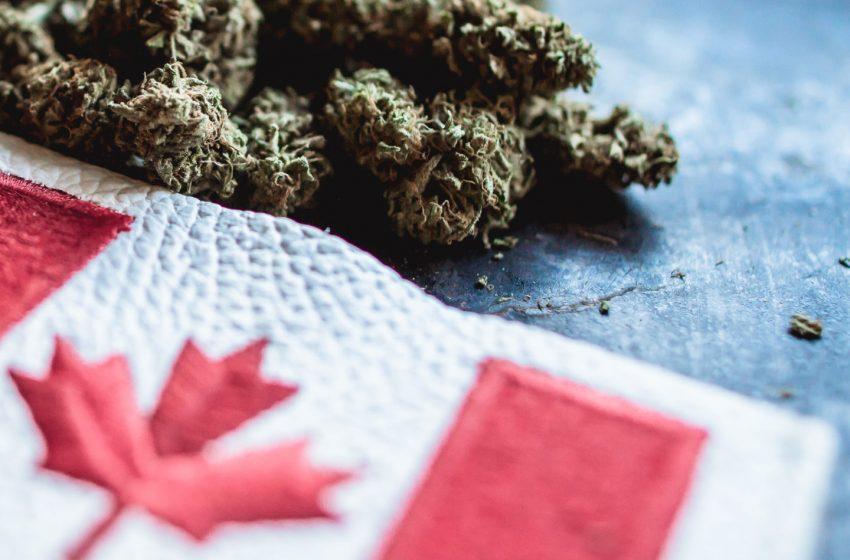 Canadá aumenta vendas de cannabis em meio à COVID-19