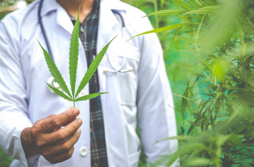 Cannabis medicinal no tratamento da epilepsia refratária