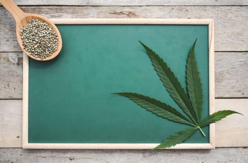 Unifesp abre 6 mil vagas para curso gratuito sobre cannabis medicinal
