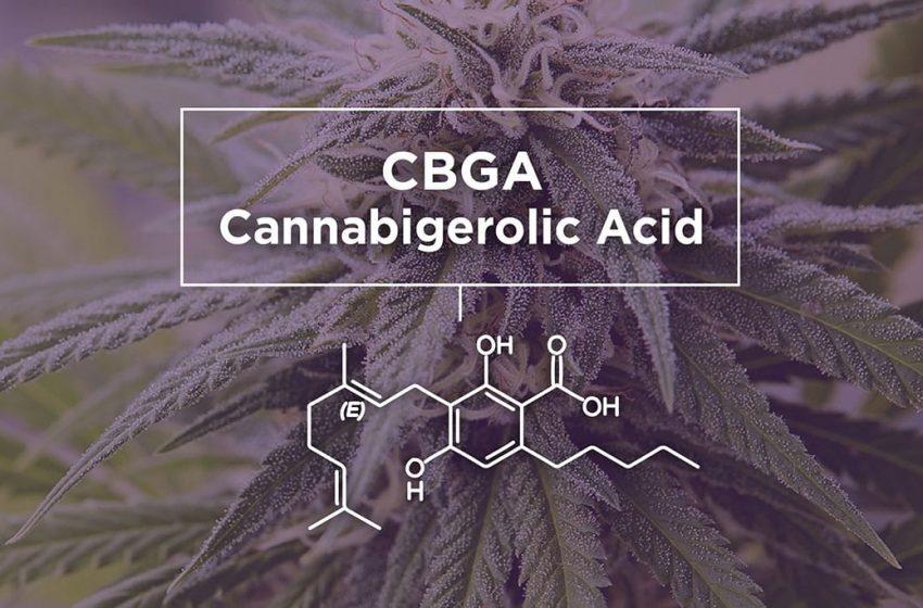 CBGA: O que é, Benefícios e Efeitos