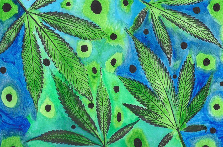 Cannabis pode ajudar no tratamento de dependentes químicos