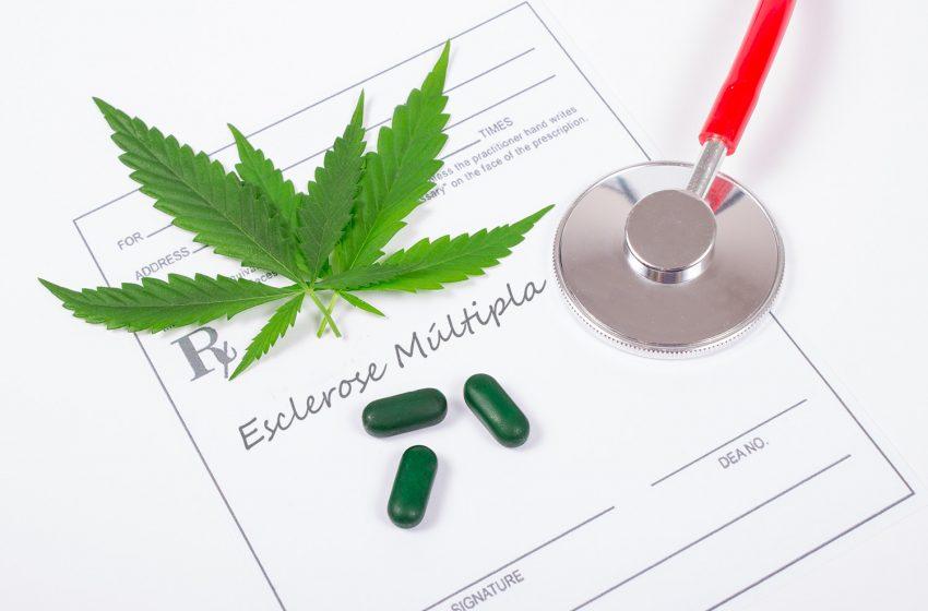 Cannabis medicinal no tratamento de esclerose múltipla