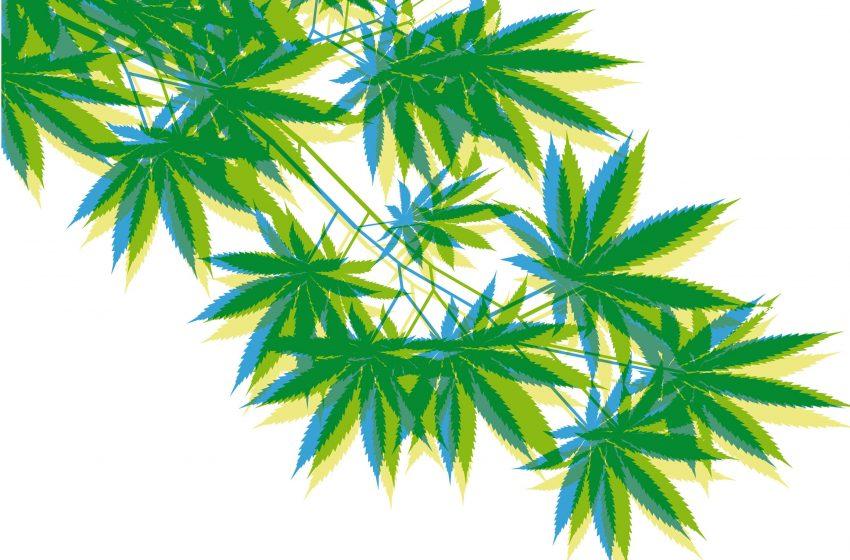 Cannabis medicinal para o tratamento de Parkinson
