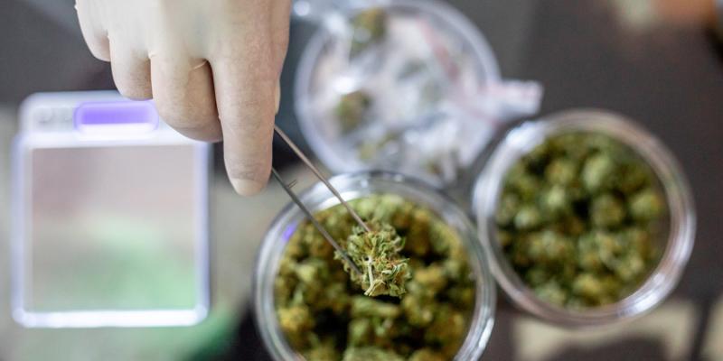 Cannabis pode reduzir a inflamação mortal do pulmão causada pelo COVID-19