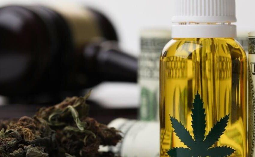 Justiças estaduais irão decidir sobre o plantio de cannabis