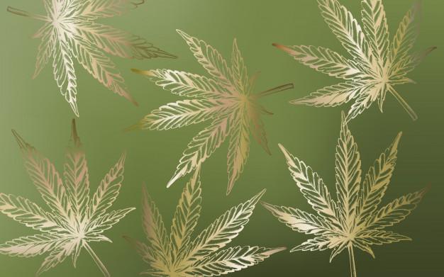 Por que acertar a dosagem de THC e de CBD é tão importante?