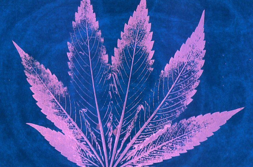 A cannabis no tratamento da ansiedade