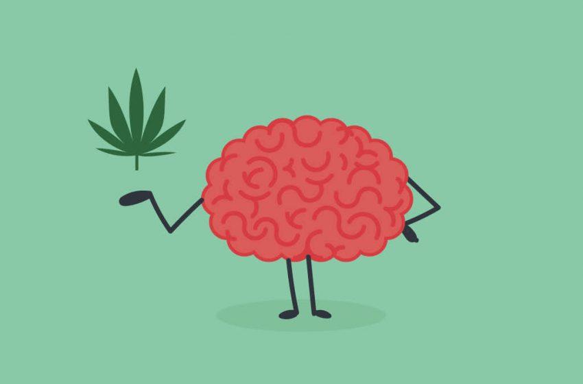 O uso do canabidiol pode aumentar o fluxo sanguíneo cerebral?