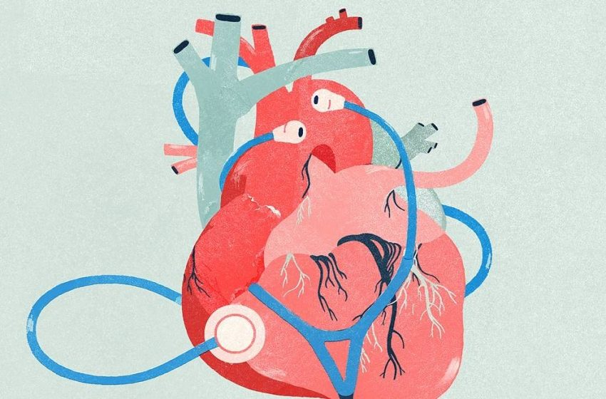 Saúde cardíaca e cannabis: qual a relação entre as duas?