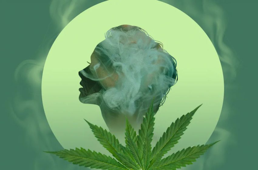 Como nosso corpo metaboliza a cannabis