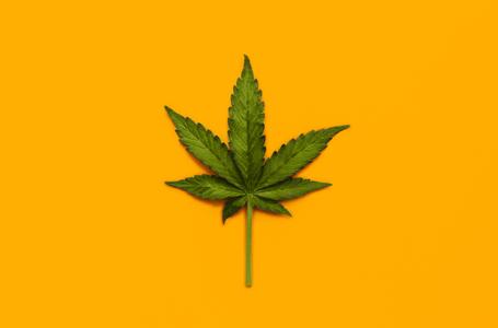 Cannabis X Dramin: Pode ser substituído?