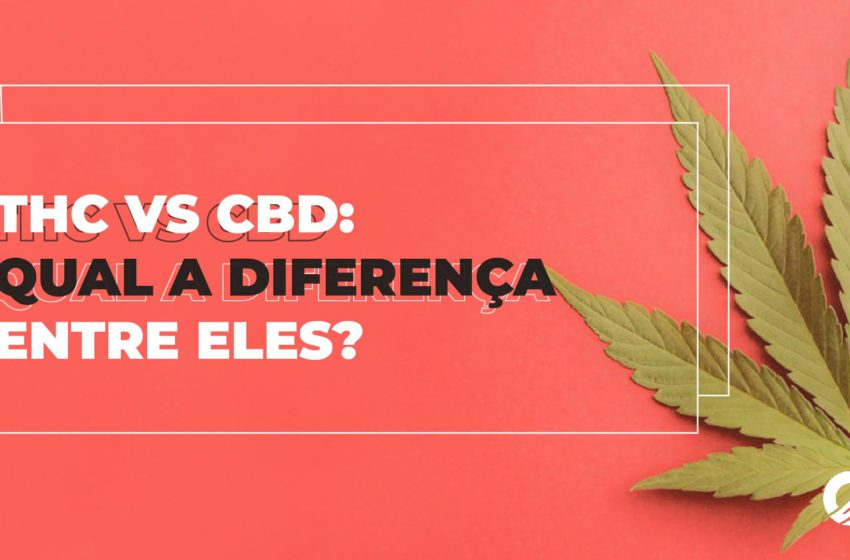 THC vs CBD: Qual a diferença?