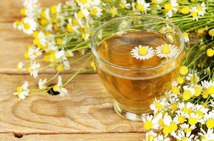 Camomila (Matricaria chamomilla): O que é, Benefícios, Efeitos e Contra-indicações