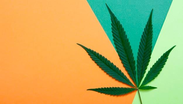Burocracia e Dificuldades: O cenário atual da Cannabis Medicinal no Brasil