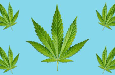 Mirtazapina X Cannabis: é possível substituir?