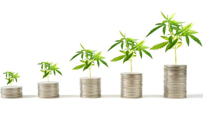Mercado global de cannabis pode chegar a 147 bilhões de dólares até 2027