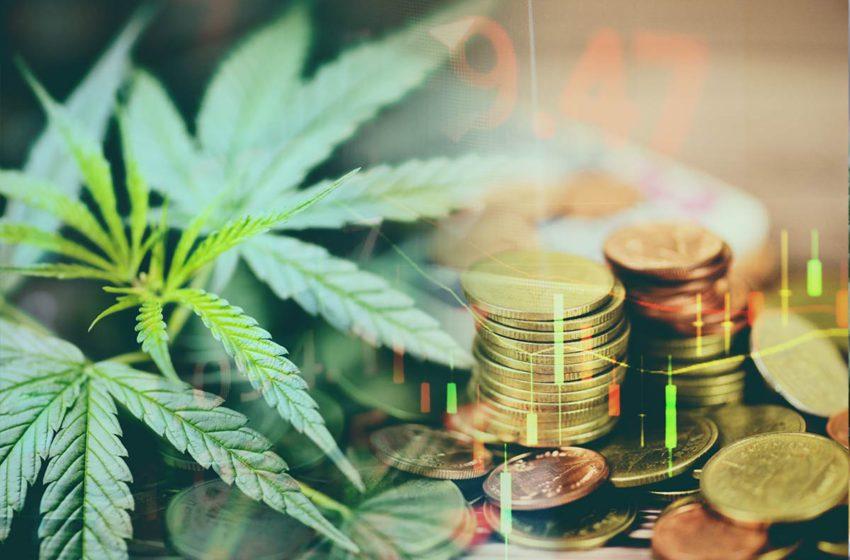 Quão barata a cannabis pode se tornar no futuro?