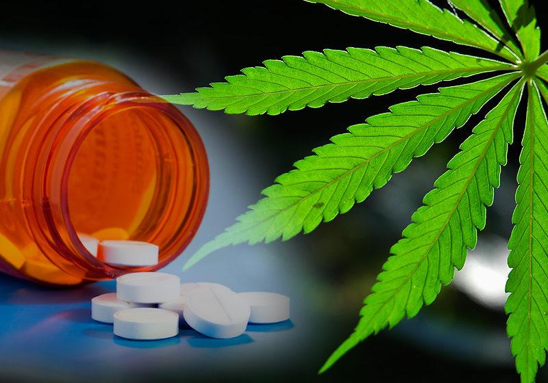 A Cannabis medicinal pode ser a solução para o fim dos opioides?