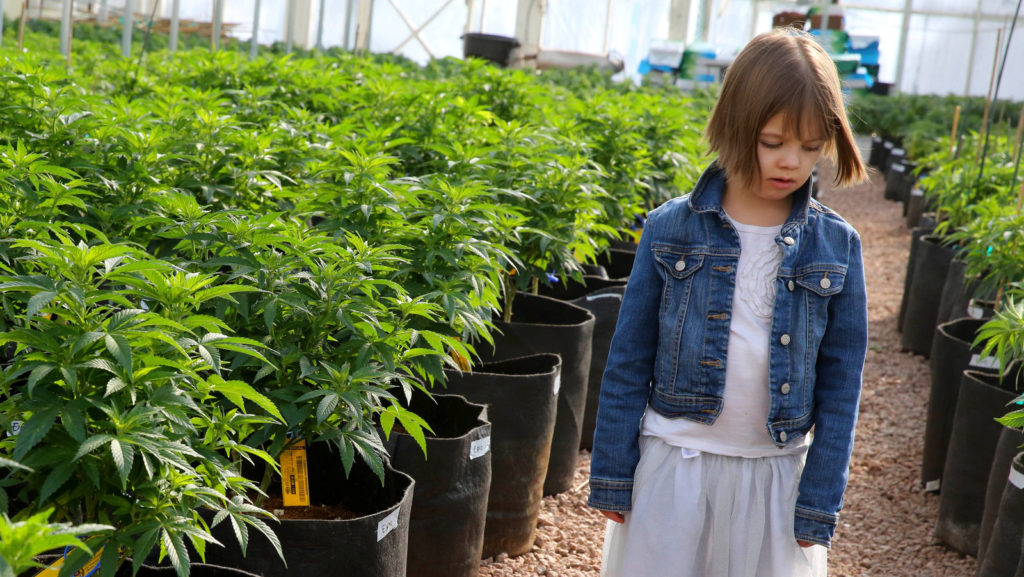 Famílias britânicas e Cannabis