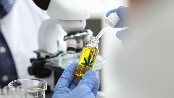 Pedido de cultivo de cannabis para estudo é negado pela Anvisa
