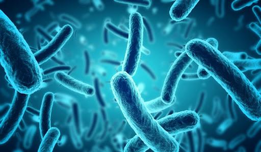 O potencial do canabidiol como antibiótico
