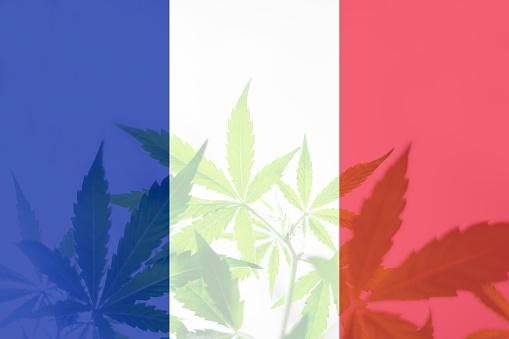 Pontos de venda de CBD se multiplicam na França