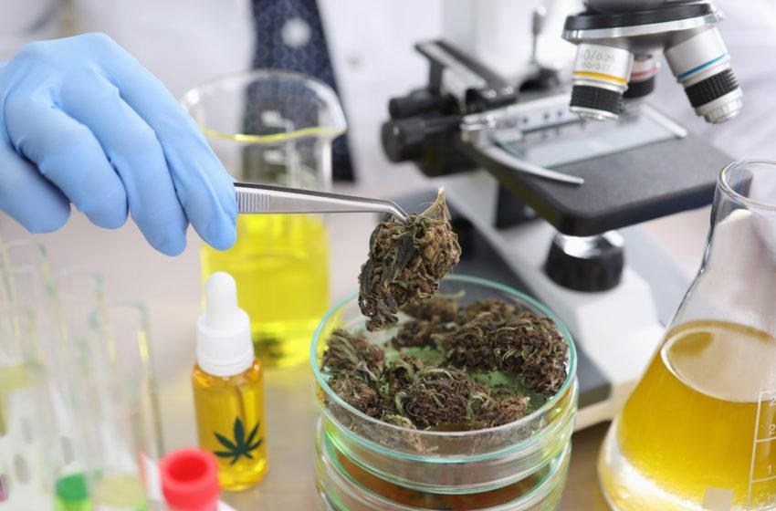 Estudo sobre CBD para o tratamento de crack é interrompido pelo Ministério da Saúde