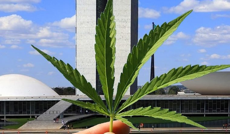 Como funciona o cenário Jurídico da Cannabis medicinal no Brasil hoje