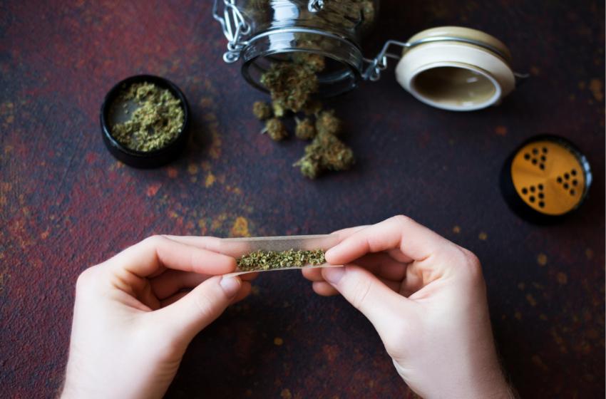 "Nunca existiu uso ""recreativo"" de Cannabis; a busca é sempre terapêutica"