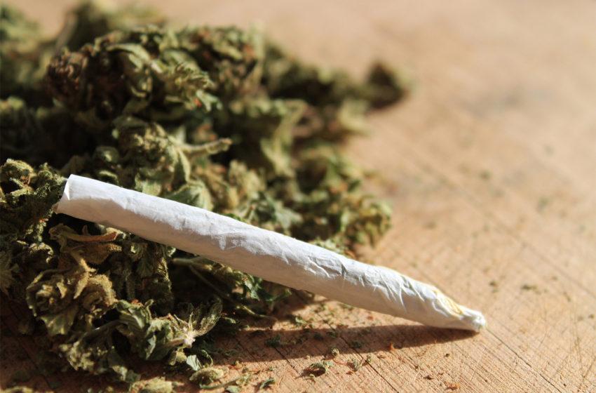A diferença entre canabis medicinal e a maconha do maconheiro