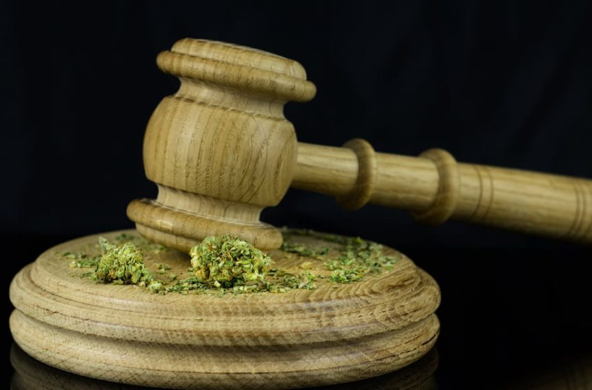 É legal importar sementes de cannabis?
