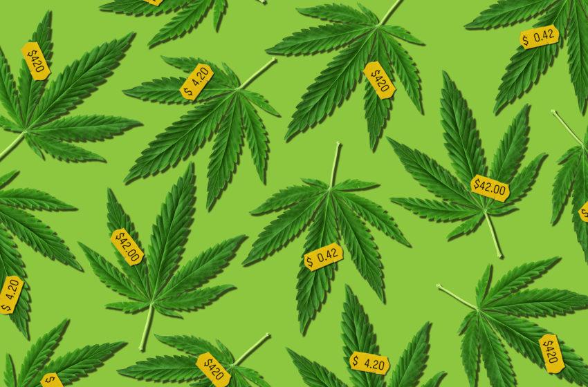 Empresas de cannabis não se intimidam com as restrições brasileiras do setor