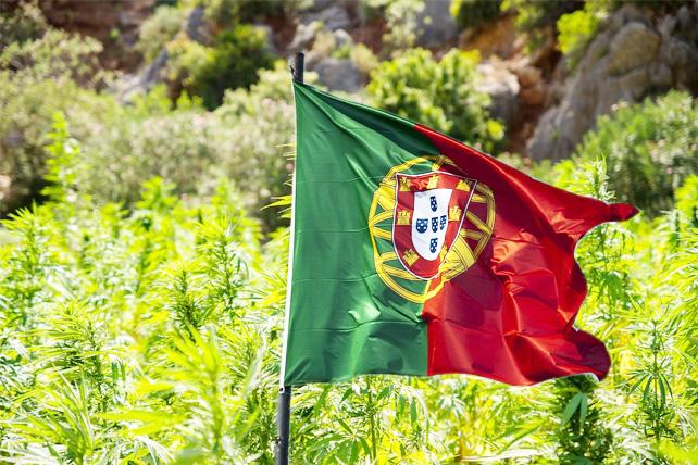 Portugal autoriza o primeiro medicamento à base de cannabis