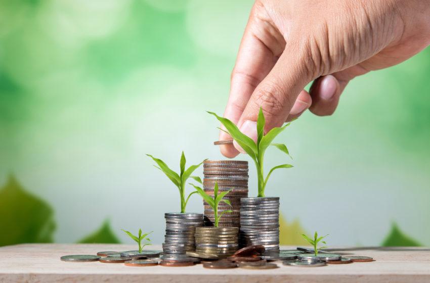 A crescente demanda de cannabis e seus benefícios econômicos