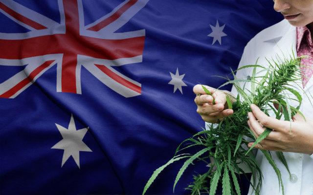 Austrália orienta médicos a não prescreverem cannabis medicinal para dores crônicas