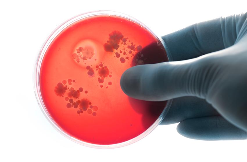 Estudo sugere que cannabis pode combater sub-bactérias